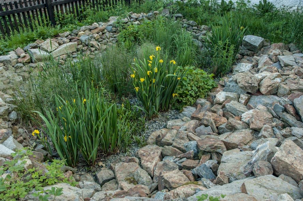 Zahradní jezírko pod kořenovou čističkou