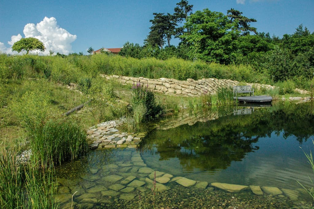 Koupací jezero pod kořenovou čističkou s dočištovacím potokem